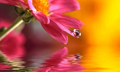 Flower Essence Activities